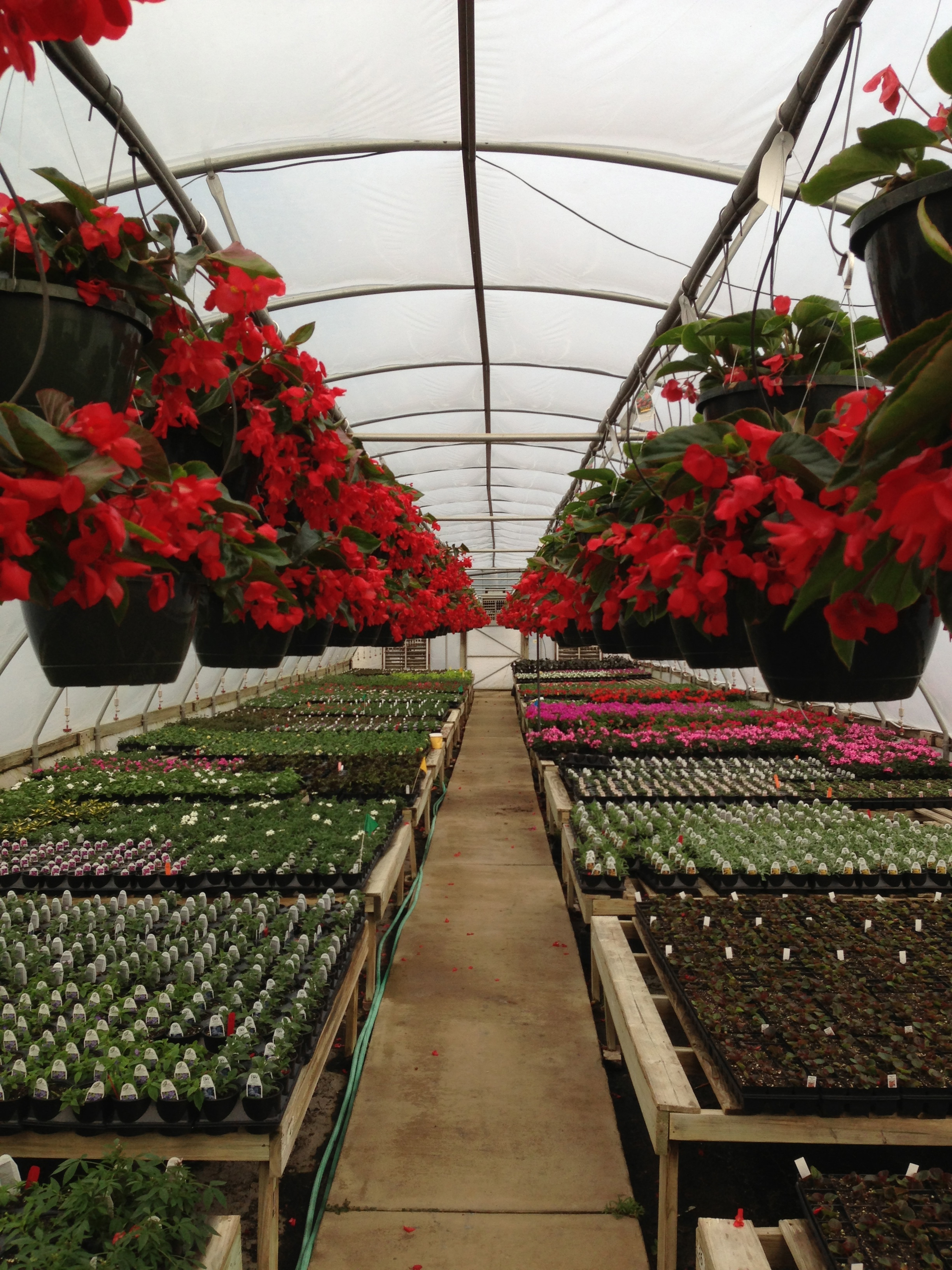 Barton\'s Greenhouse and Nursery | Wholesale grower of industrial ...